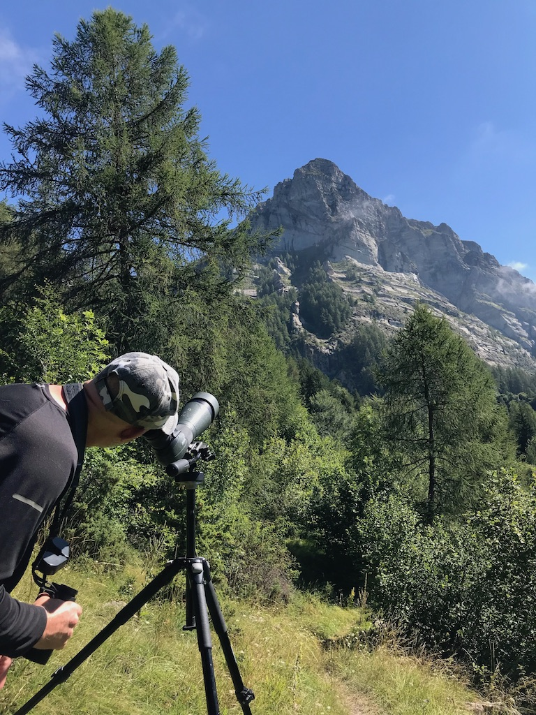 bird observation in the Southern French Alps.jpeg